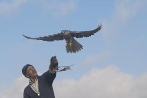 falconeria3